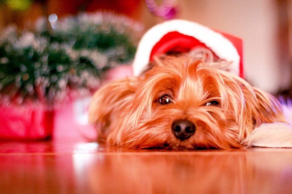 Make Your Life Easier this Christmas