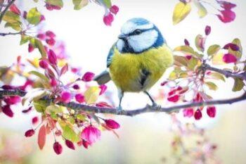 Spring Self Care ideas